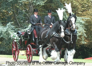 Horse and Carriage for your wedding to get you a beautiful and traditional arrival