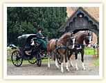 Wedding Horse and Carriage Essex.  Professional Horse and Carriage Hire.  Horse and Cart Rental London Weddings